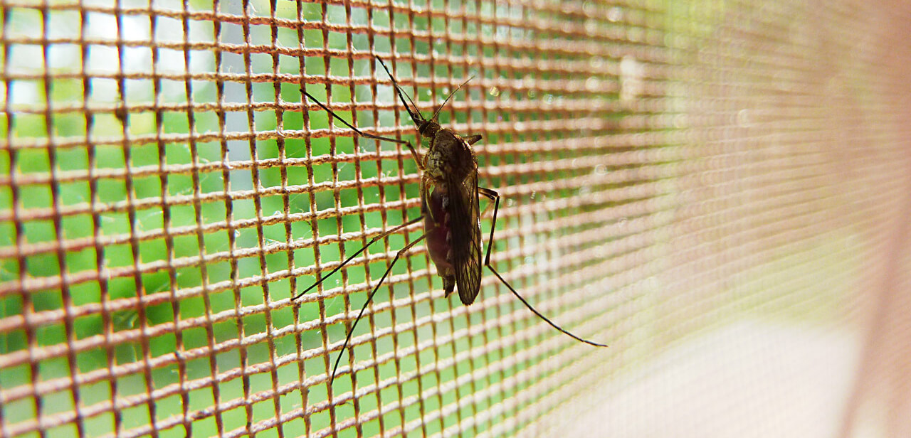szúnyogháló típusok